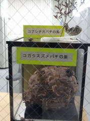 衛生研究所20140012.JPG